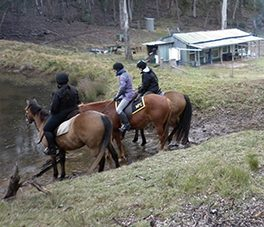 Day Horse Rides - Burnelee Excursions on Horseback